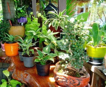 Is Softened Water Safe For Your Plants?